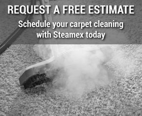 Request a Free Estimate | Schedule your carpet cleaning with Steamex today